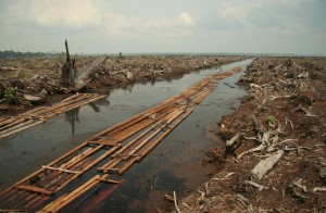 deforestation-in-Indonesia